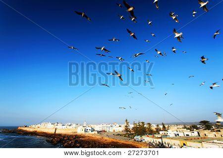 SEagulls over old medina of Essaouira, Morocco, Africa