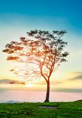 One Tree Sunset / The Tree On Slope Hill Mountain And Beautiful Sunrise With Tree Alone And Sun Sky poster