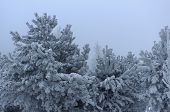 Winter Landscape Of The Siberian Forest Or Taiga In Extremely Cold Temperatures And Frost At Dusk. T poster