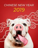 Adorable Bulldog puppy with a snout in front of a Chinese New Year background poster