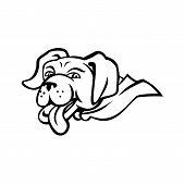 Sports Mascot Icon Illustration Of Head Of A Labrador Retriever Dog Wearing A Cape With Tongue Out   poster