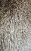 stock photo of arctic fox  - Polar fox fur texture - JPG