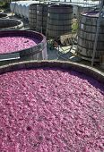 Manufacture of wine (series). Process of a fermentation of wine in old oak kegs