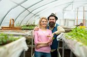 Couple In Greenhouse. Couple Working In Greenhouse. Greenhouse Couple Workers Planting Flowers. Fami poster