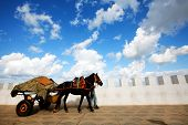 foto of asilah  - Cart pulled by horse in Asilah old medina - JPG