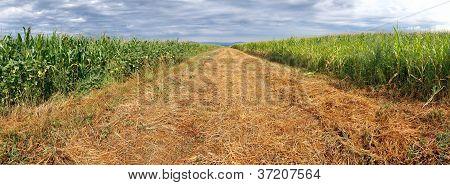 Arable field panorama