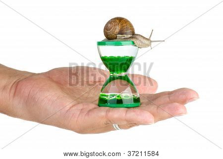Snail And Gel Hourglass On The Palm