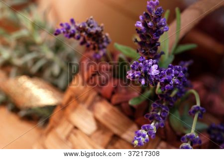 Floral still life with freshly cut lavender in  wicker basket. Additional lavender wrapped with shiny gold ribbon in background.  Macro with extremely shallow dof.
