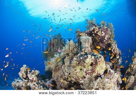 Tropical Coral Reef Scene