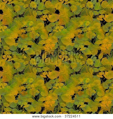 Autumn Color Leaves on Black Background