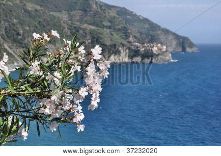 Flowers Of Cinque Terre