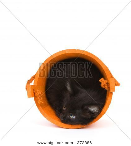 Kitten And Orange Barrel