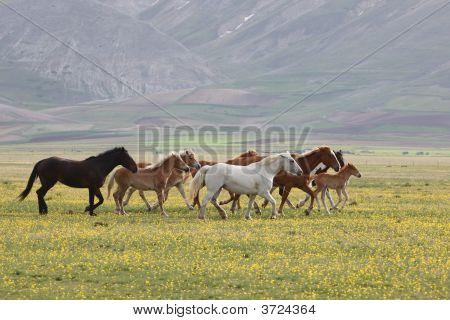 Wild Horses Umbria