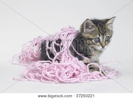Kitten And Pink Wool