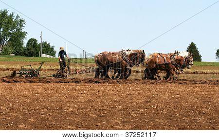 Cavalos de arado