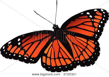 Viceroy Butterfly Vector