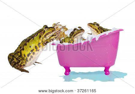 Frogs Enjoying A Bubble Bath