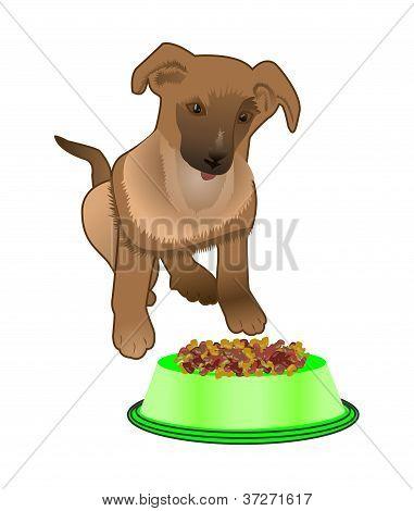 Dog Near Bowl With Food