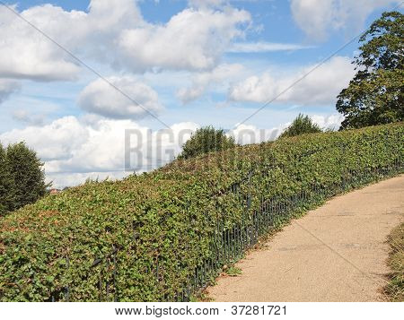 Hill hedge