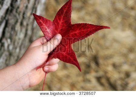 Holding A Leaf