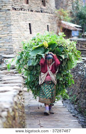 Gurung woman, Nepal