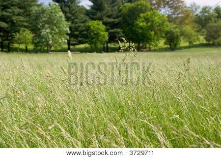 Pradera de hierba alta