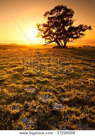 Beautiful sunrise in the Clare Valley, South Australia