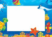 picture of sea life  - High resolution background for your summer photo frame - JPG