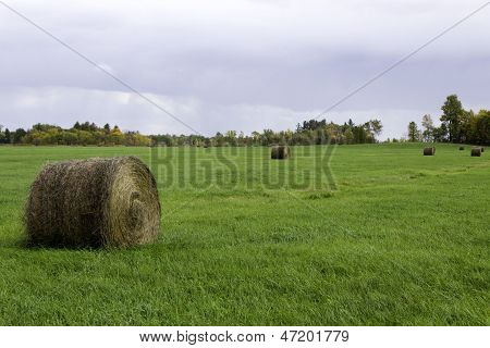 Farm Field With Bails Of Hay