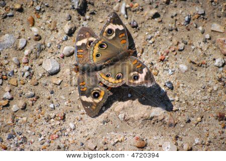 2 Butterflys Mate