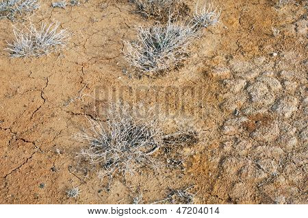 Top View Of Desert Plants