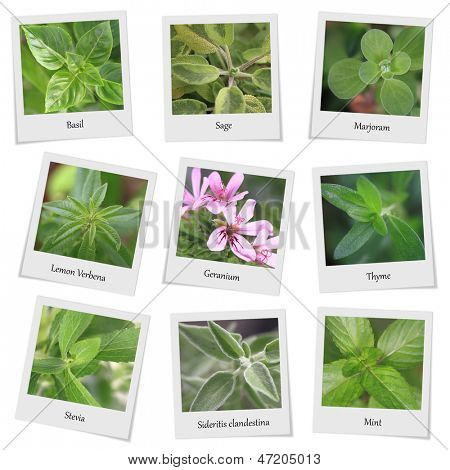 Collection of herbs and spices photo frames