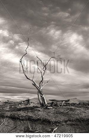 Dramatic Image Of Barren Tree.