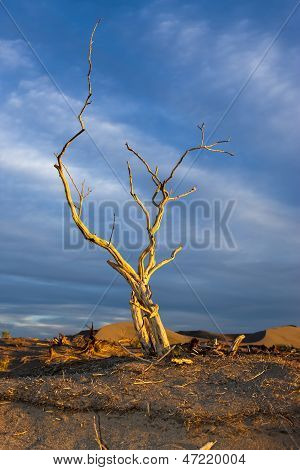 Barren Tree In Golden Light.