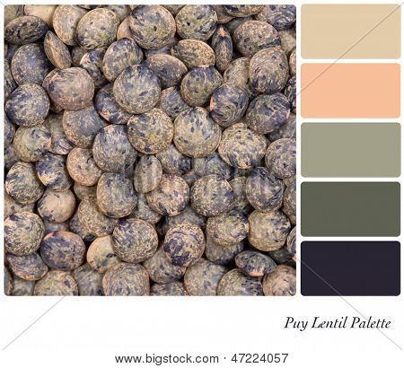 A closeup background texture dried French Puy lentils,  in a colour palette with complimentary colour swatches.