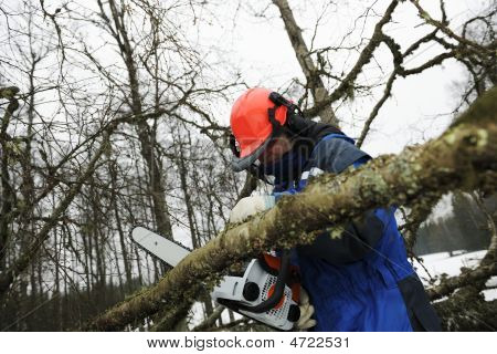 woodcutter in action