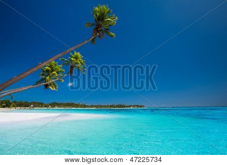 Few coconut palms on deserted beach of tropical island