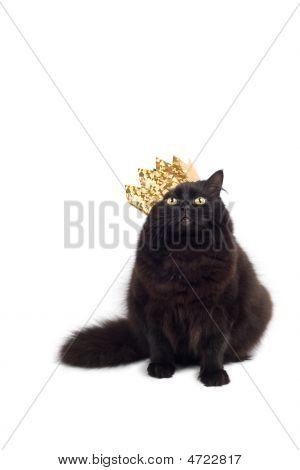 Rei do gato