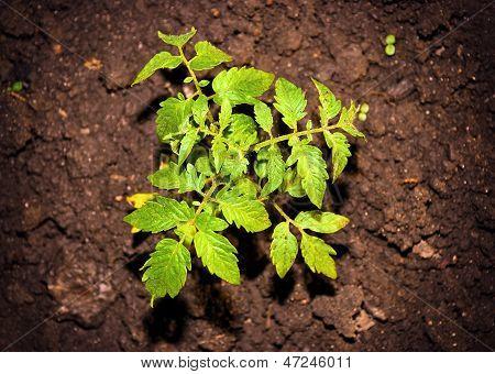 Environmental Green Plant