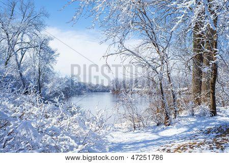 Snow Flocked Trees, Mississippi River