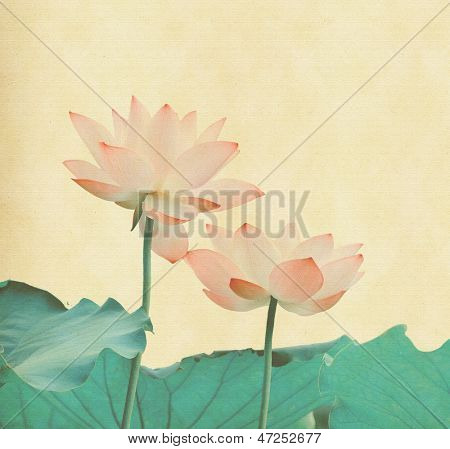 lotus on the old grunge paper background