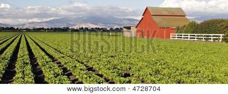 Scenic Farm Countryside