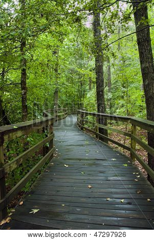 Congaree Swamp National Park Boardwalk