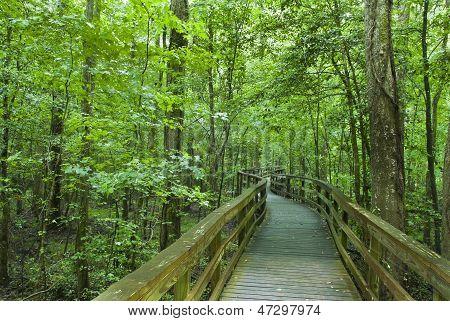 Congaree National Park Boardwalk