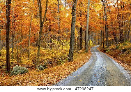 Winding Mountain Road in Autumn
