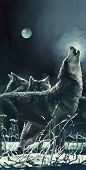 picture of wolf moon  - Wolves - JPG