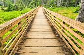 pic of marshes  - A forest surrounds a paved walking trail - JPG