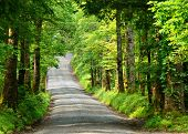 pic of gatlinburg  - Old country lane - JPG