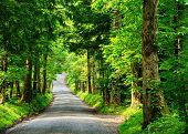 stock photo of cade  - Old country lane - JPG