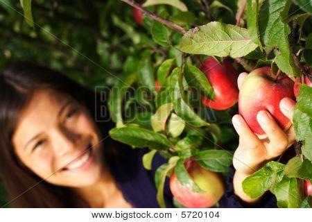 Frau Kommissionierung Apfel vom Baum